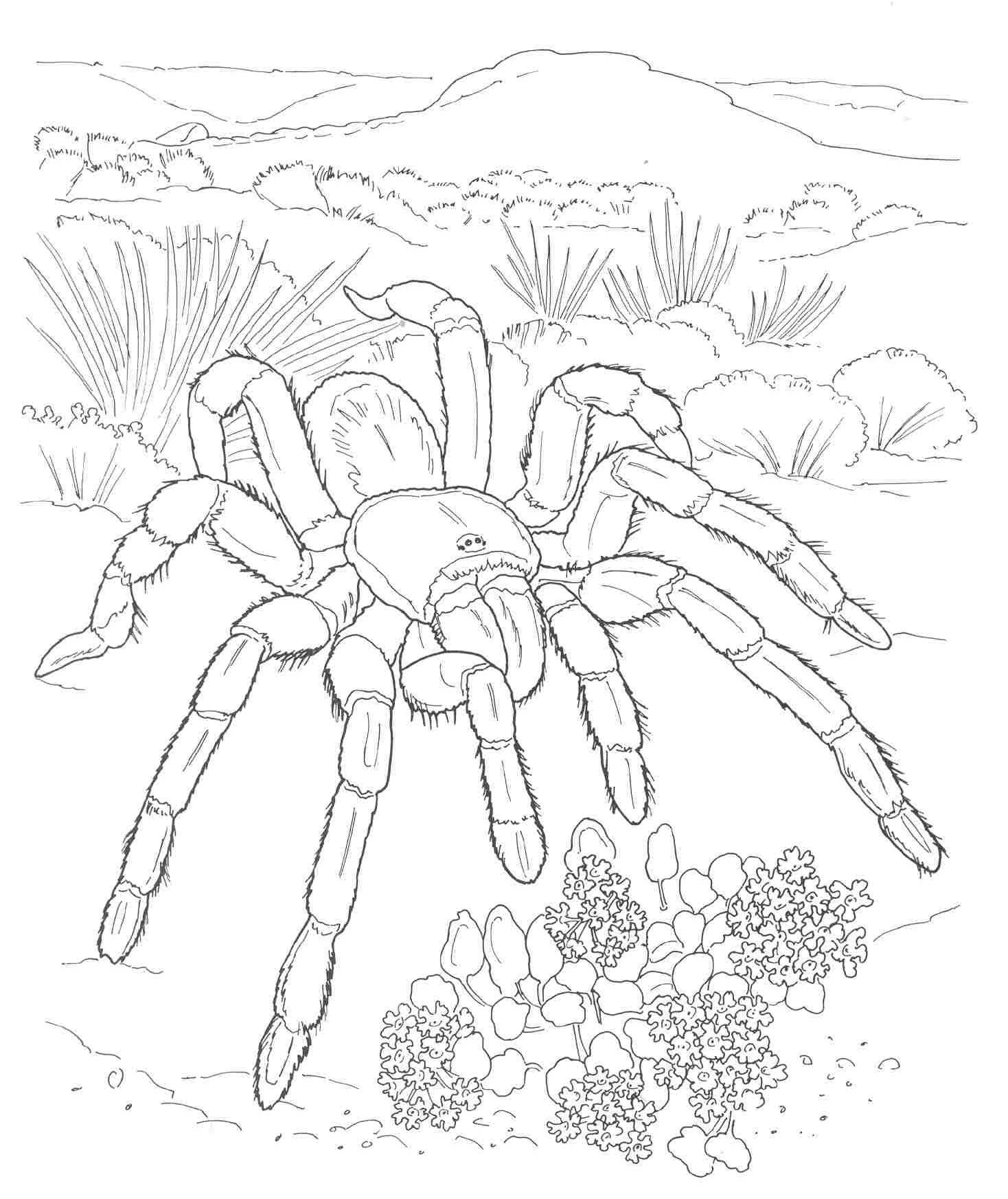 Desert Coloring Page Coloring