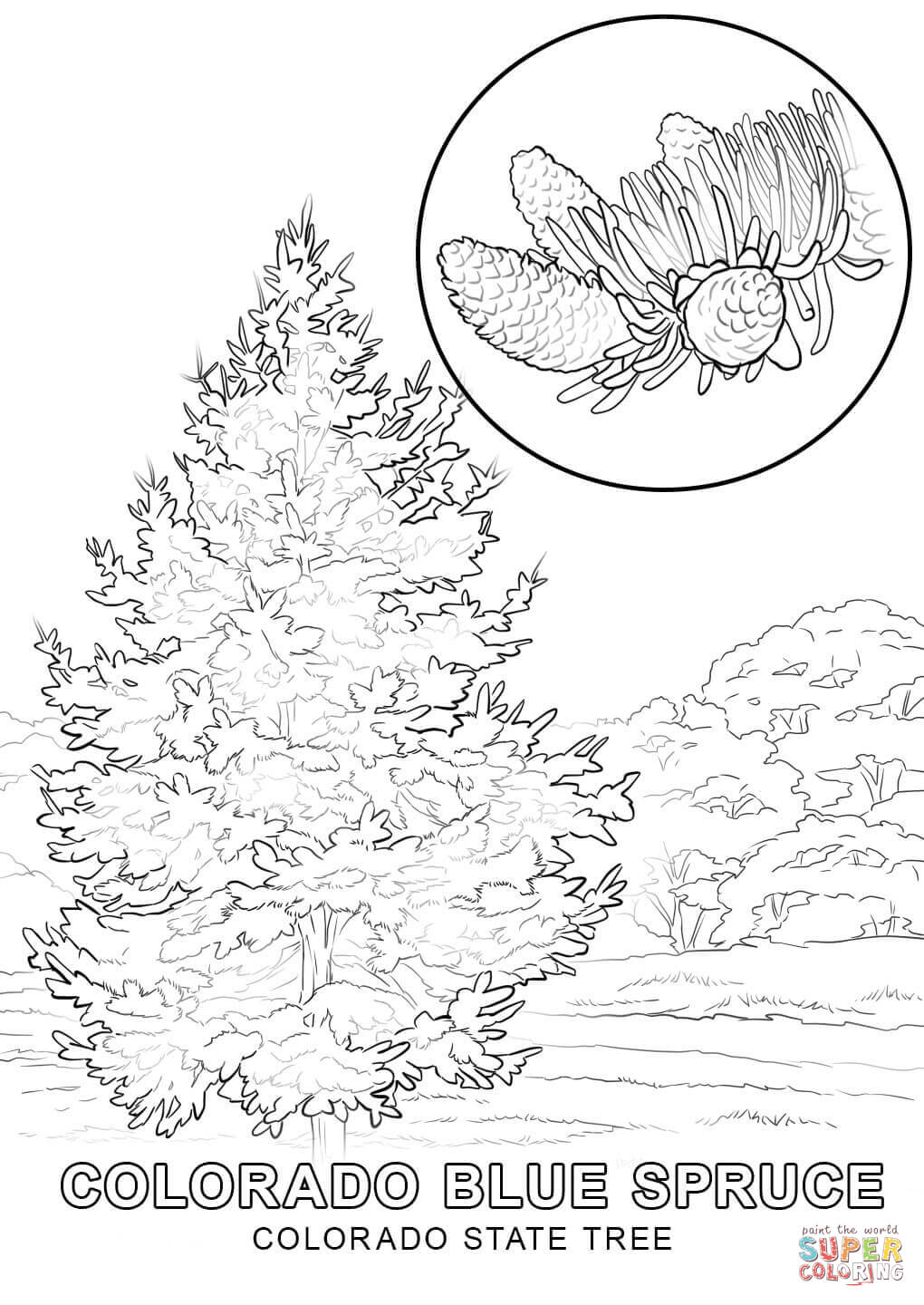 Nebraska State Tree Coloring Pages Photo 36