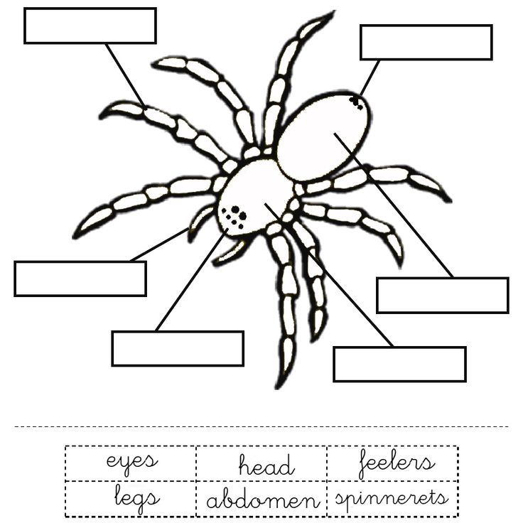 anansi the spider coloring page