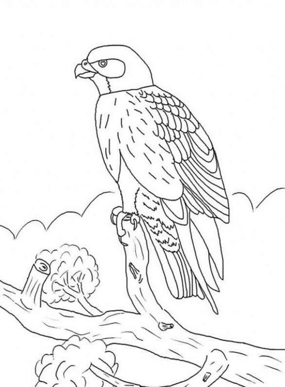 Kids Falcon Bird Coloring Pages Bird Coloring Pages Super Coloring Pages Animal Coloring Pages Coloring Home