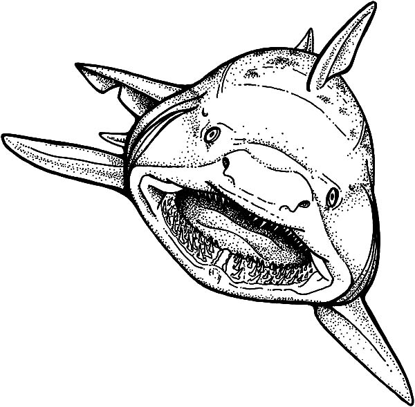 Shark Strong Jaws Coloring Pages : Best Place to Color