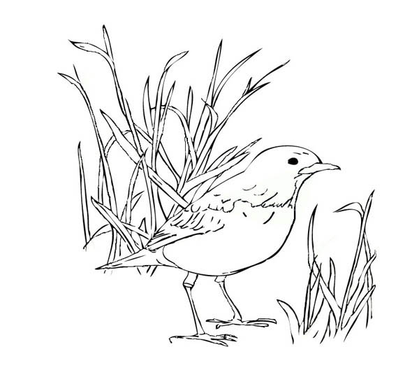 How to Color Robin Bird Standing On The Ground Coloring Page : TOODSY COLOR