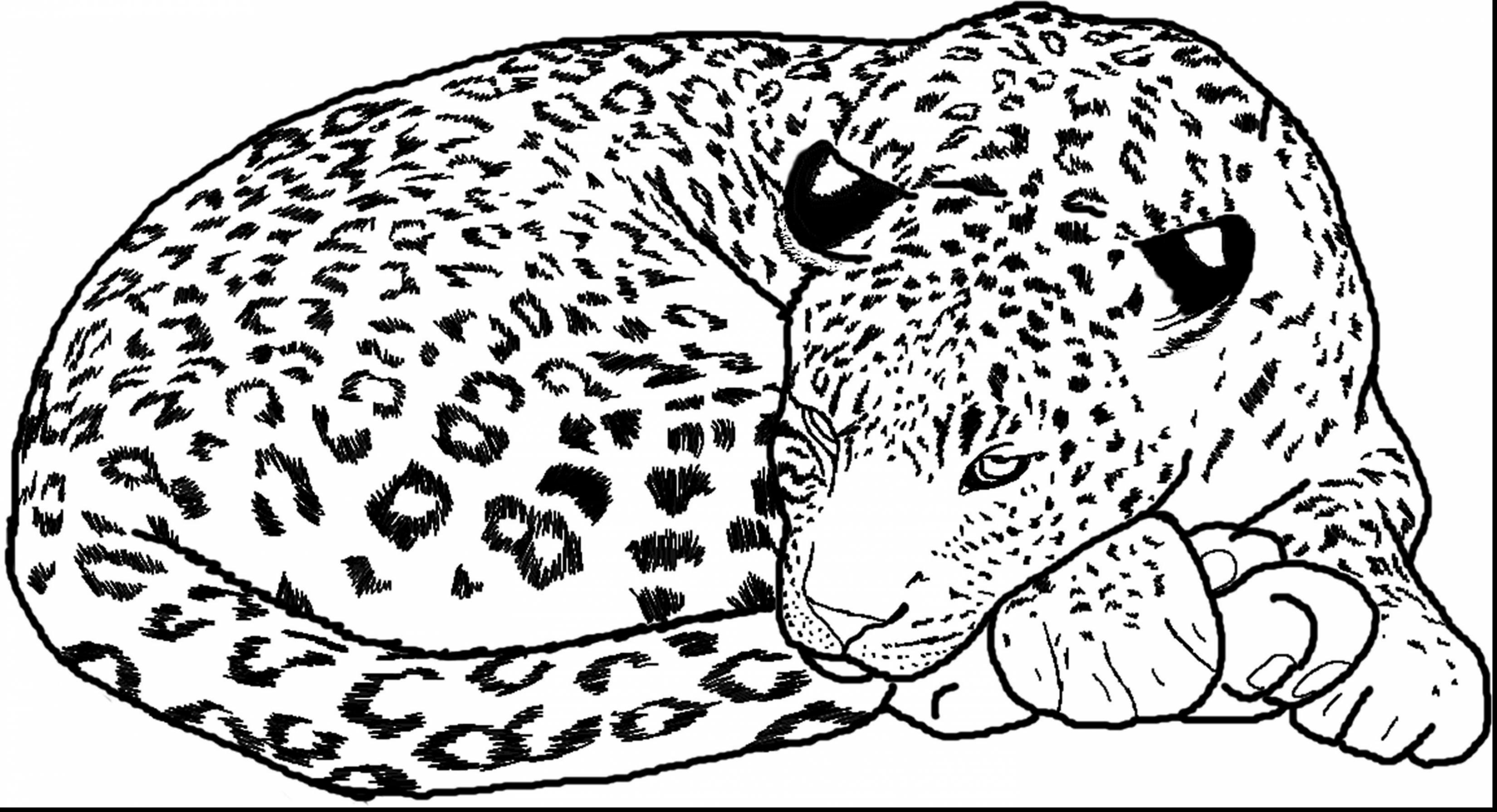Leopard Pictures To Print