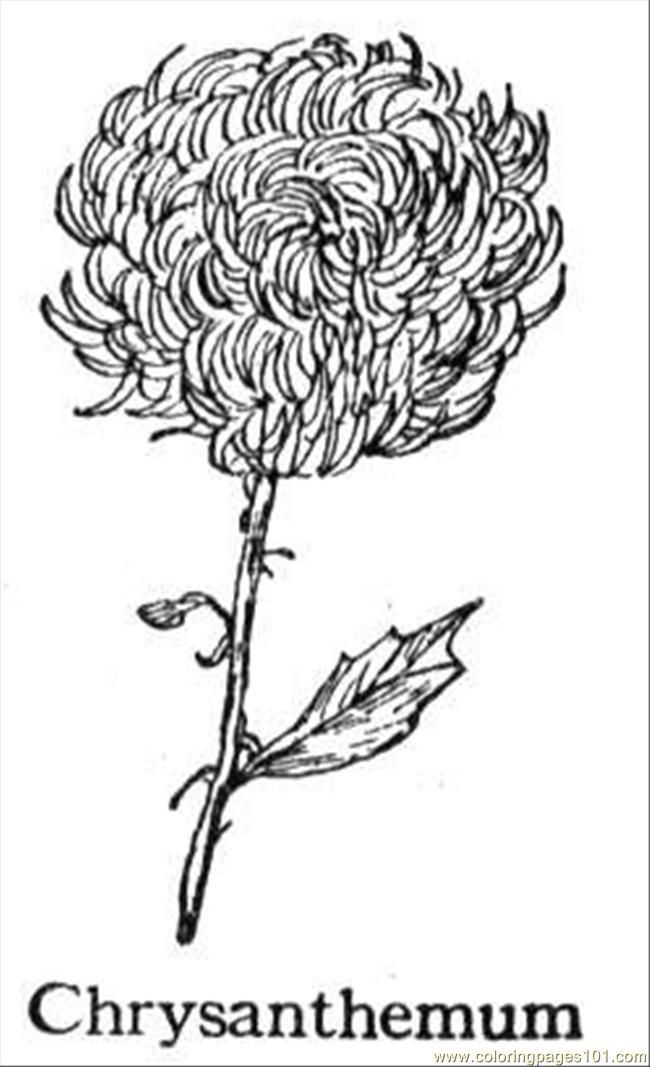 12 Pics of Chrysanthemum Coloring Pages For Preschoolers .