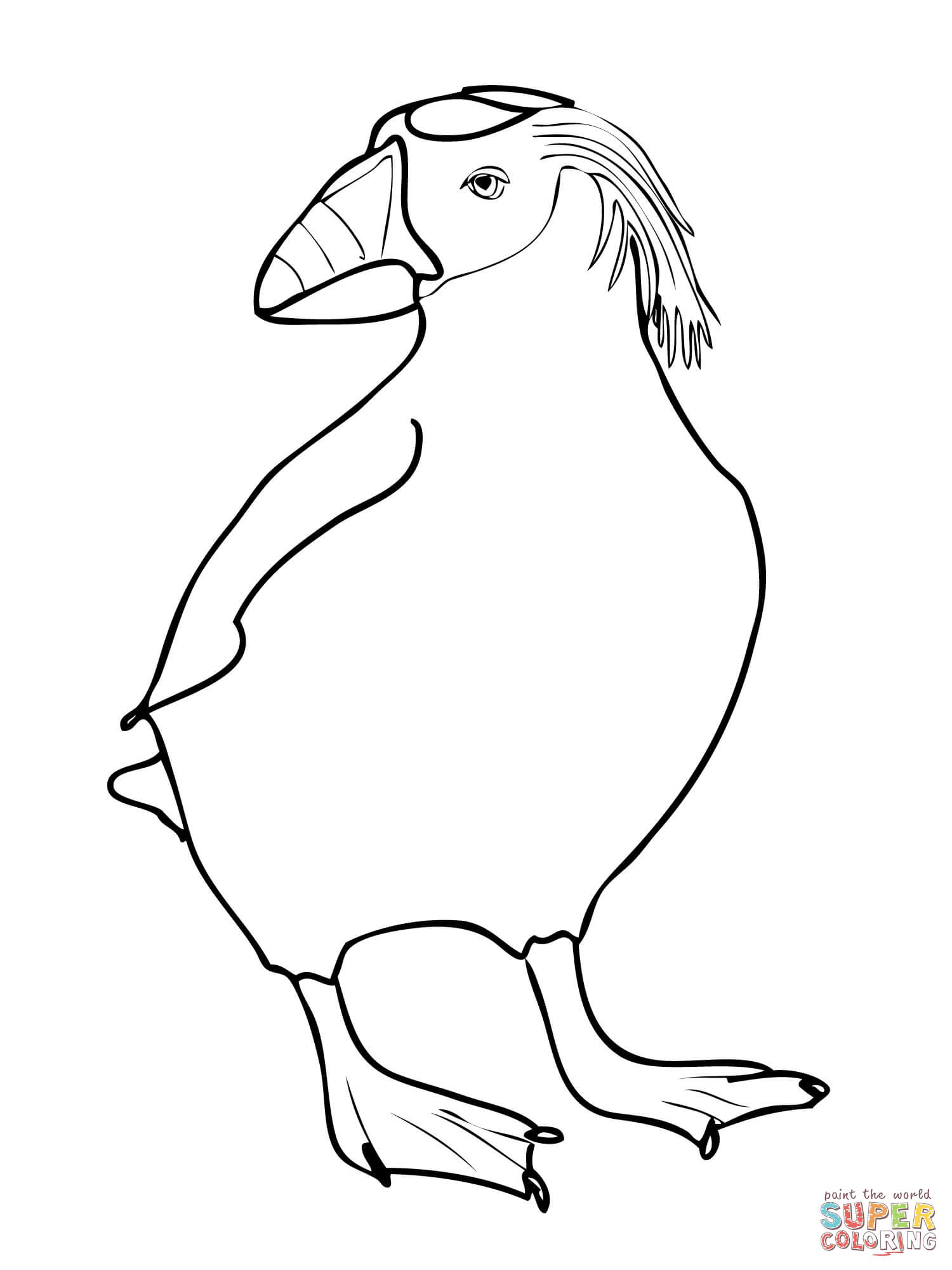 Adult Beauty Puffin Coloring Page Gallery Images best puffin coloring page az pages gallery images