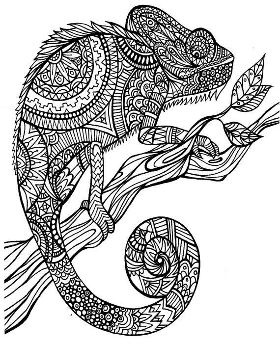 Mixed Up Chameleon Coloring Page AZ Pages