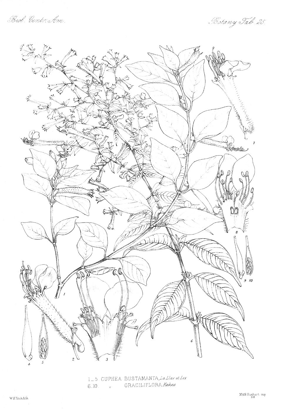 botany coloring pages - photo#6