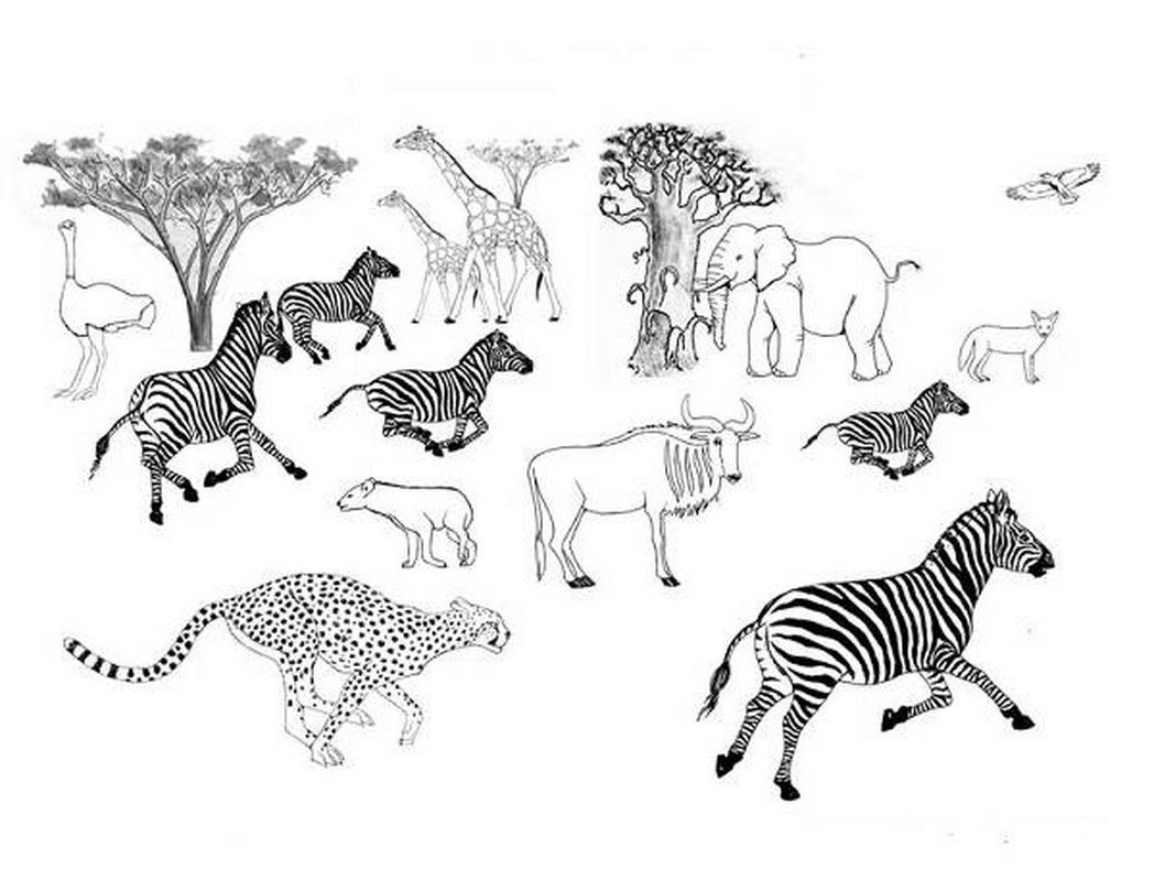 Coloring pages african savanna trend 452718 â coloring pages for