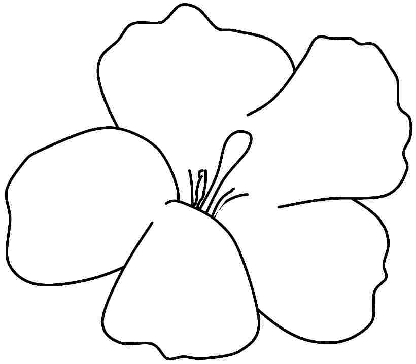 Free Coloring Pages Of Hibiscus Flowers Az Coloring Pages Hibiscus Coloring Page