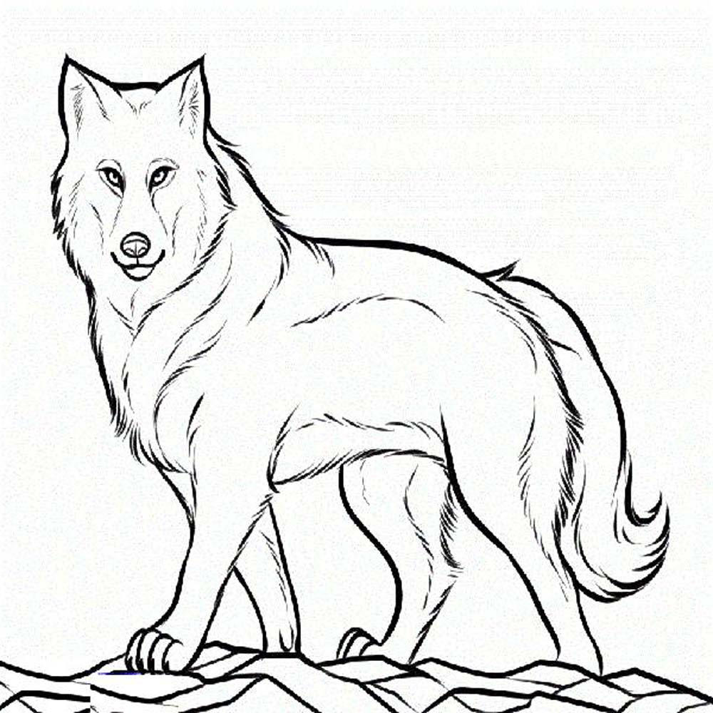 Wolf With Pup Coloring Pages - Coloring Home
