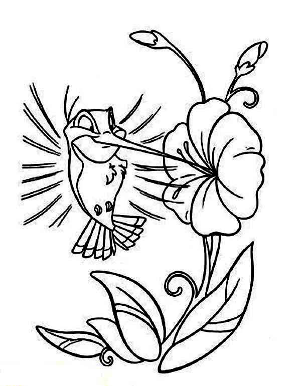 cartoon hummingbird coloring page kids play color - Hummingbird Coloring Pages