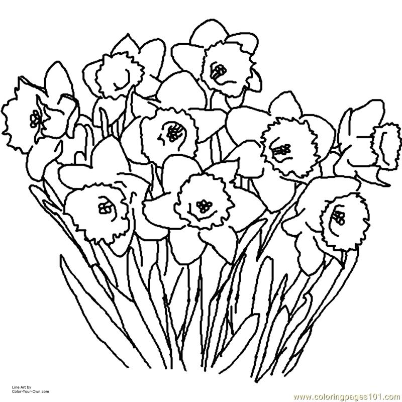 Daffodil Coloring Page - Free Flowers Coloring Pages ...