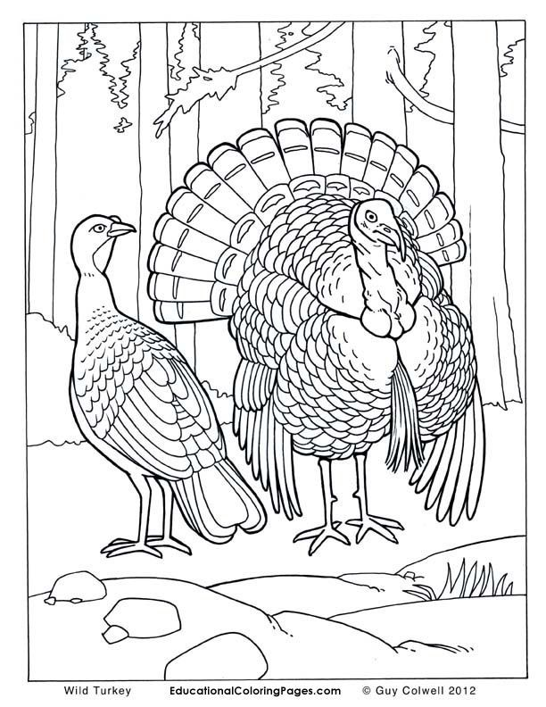 turkey | Turkey Drawing, Wild Turkey and Turkey ...