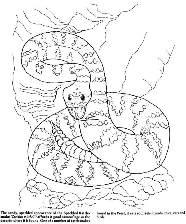 Pin by Brenda Youngs on Coloring pages 2nd edition