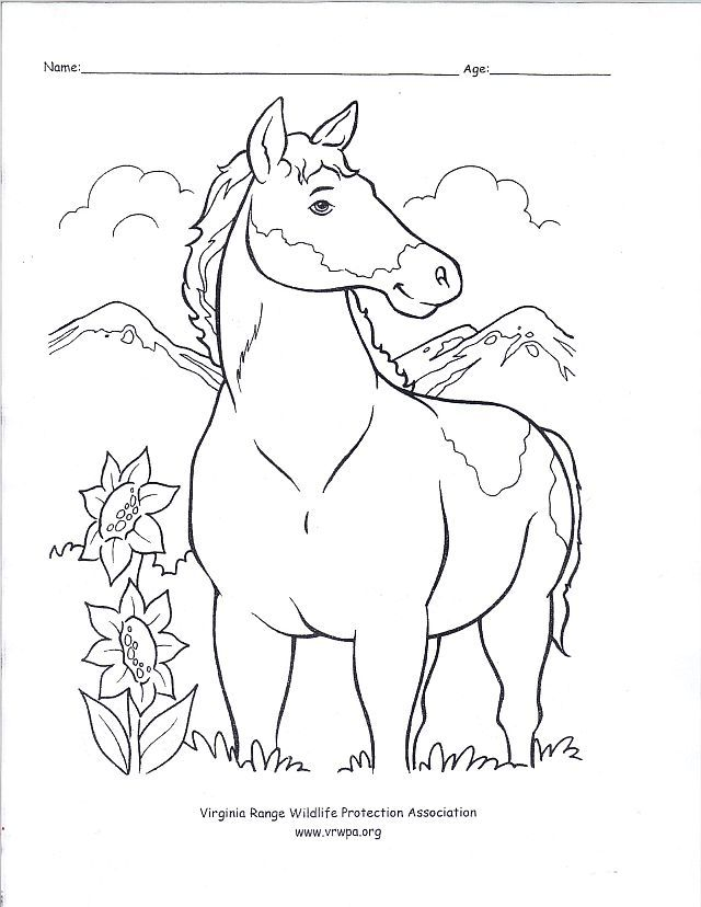 Horse Coloring Pages For Adults - Coloring Home