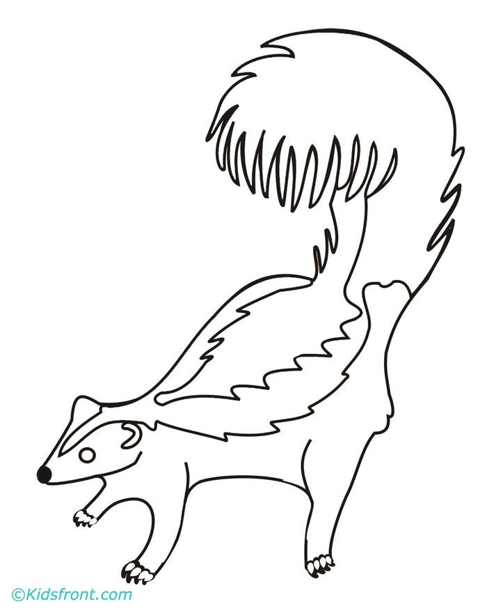 Skunks pictures coloring home for Coloring page of a skunk