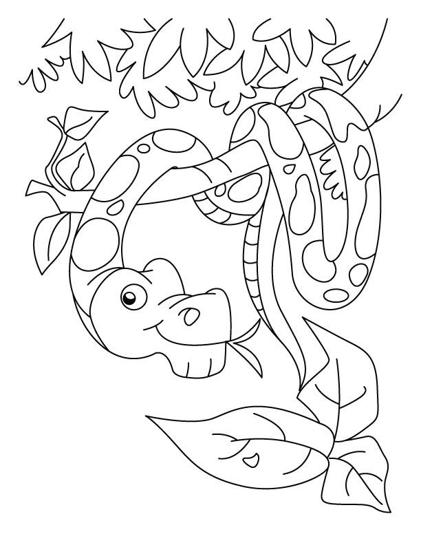 coloring pages snakes - snakes coloring pages coloring home