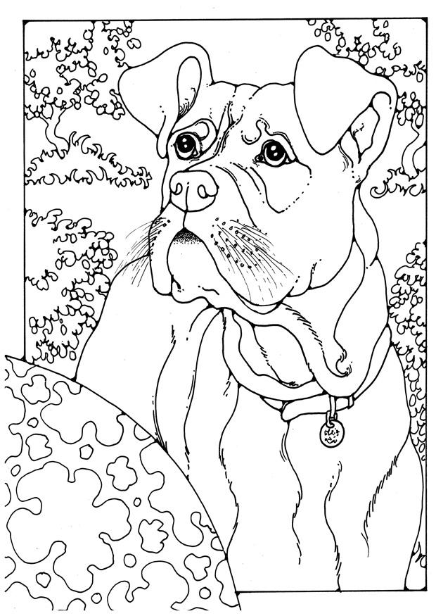 Boxer Dog Coloring Pages Coloring
