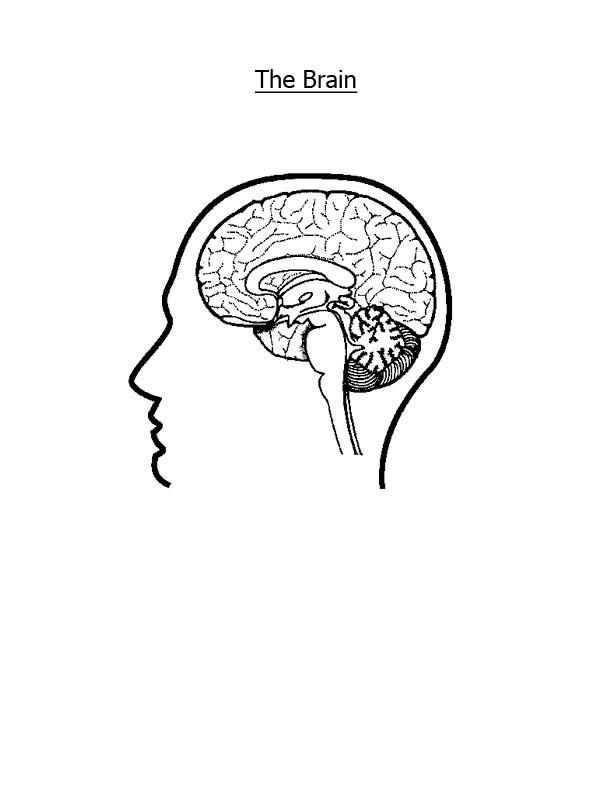Nervous System Coloring Pages Az Coloring Pages Nervous System Coloring Pages