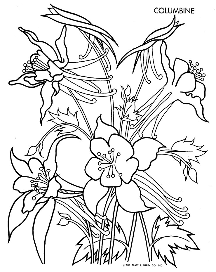 Columbine Flower Line Drawing : Christmas tracing pages search results calendar