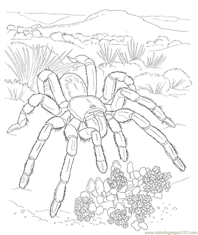 Coloring Page Spider AZ Coloring