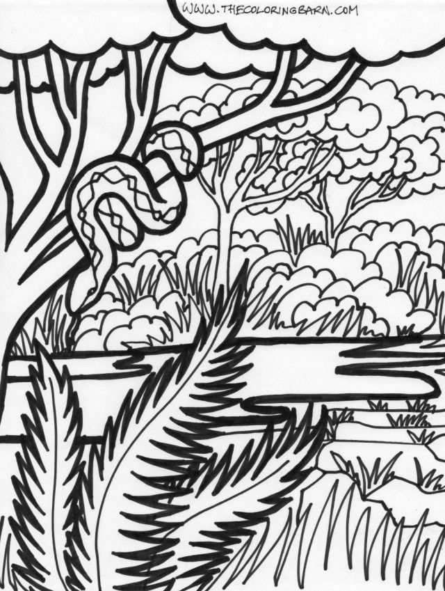Photo To Line Art Converter Online : Rain forest coloring pages home