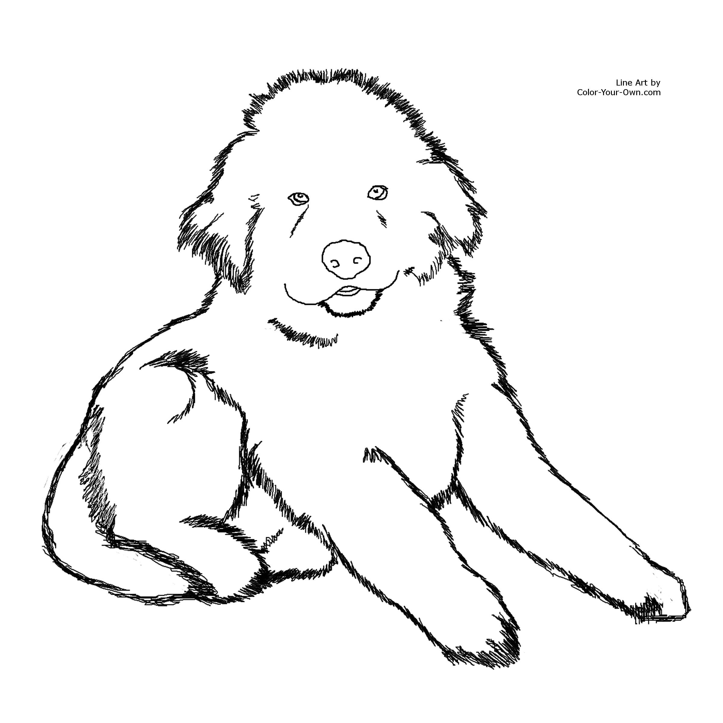 Coloring Pages Fluffy Dogs