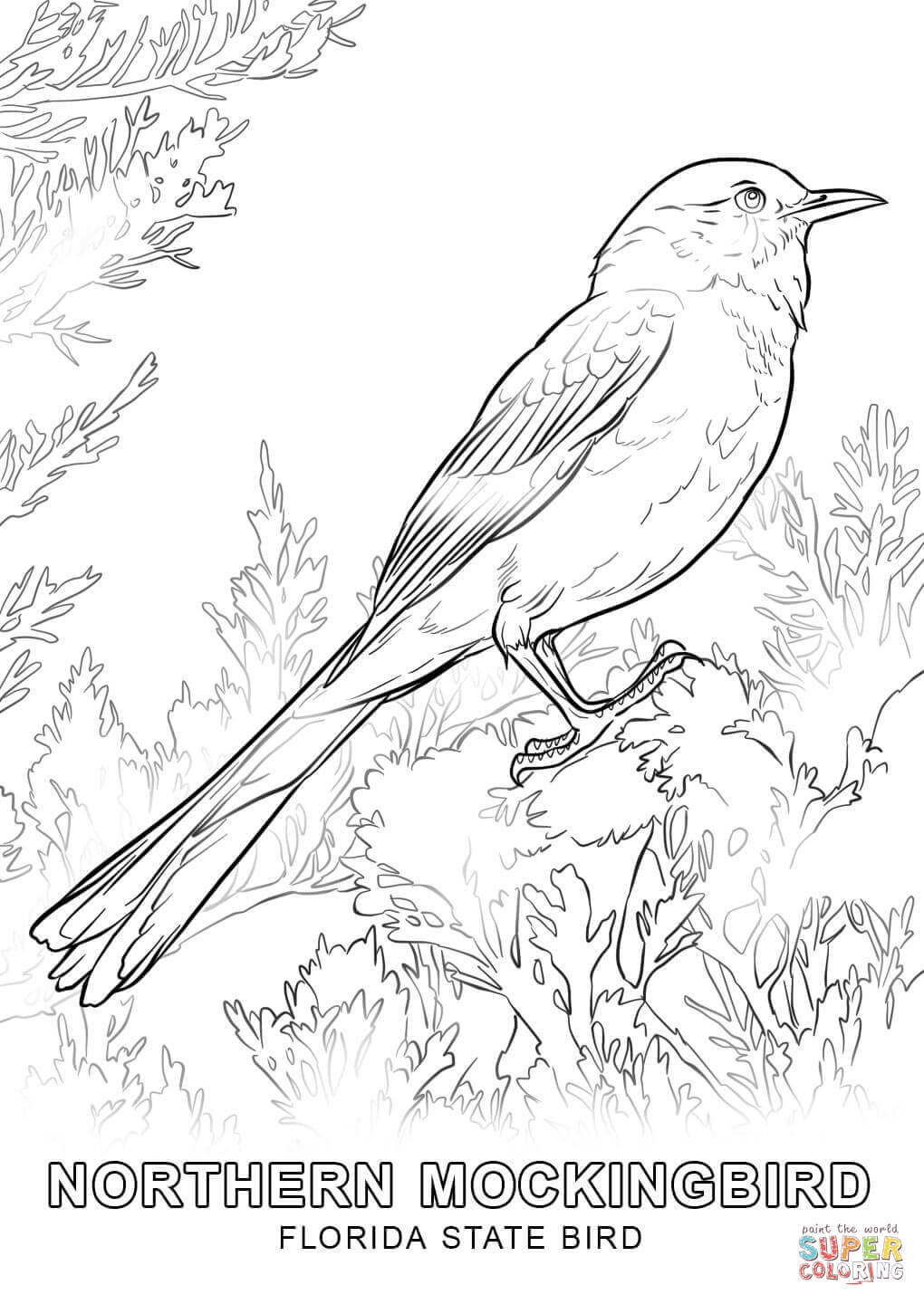 Animal Coloring Books for Adults Capture Terrific Wildlife ... | 1440x1020