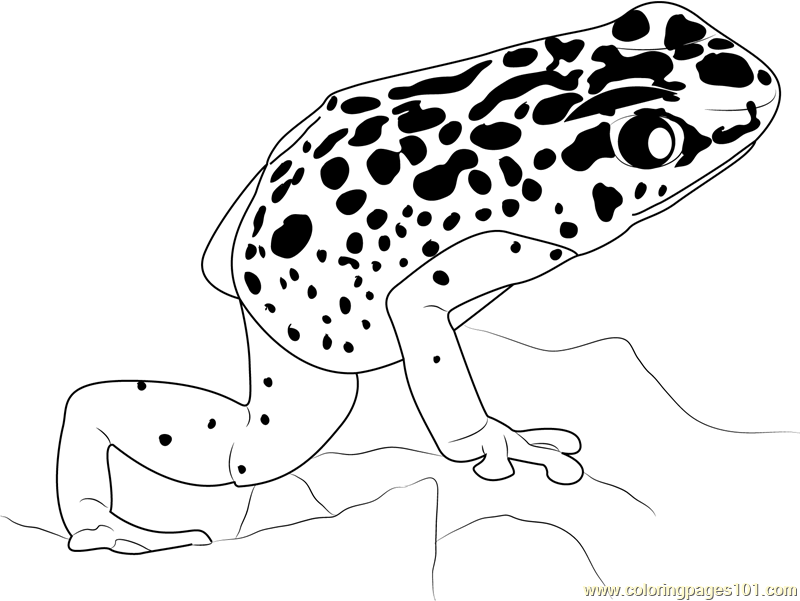 poisonous frog coloring pages - photo#11