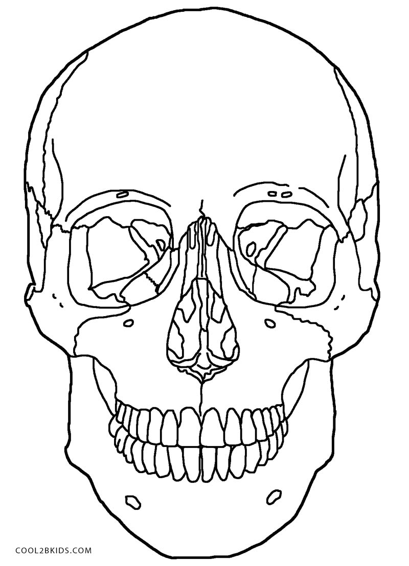 The anatomy coloring book online - Printable Anatomy And Physiology Coloring Pages For Kids And For