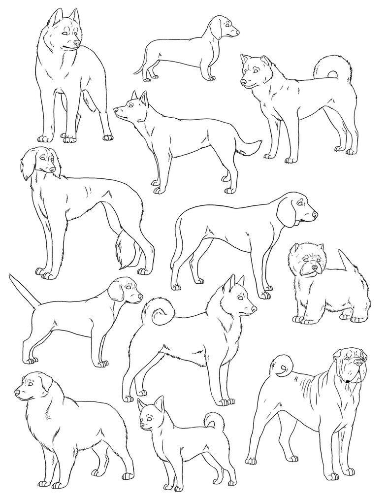 7 Pics Of Australian Shepherd Coloring Pages - Australian Shepherd ...