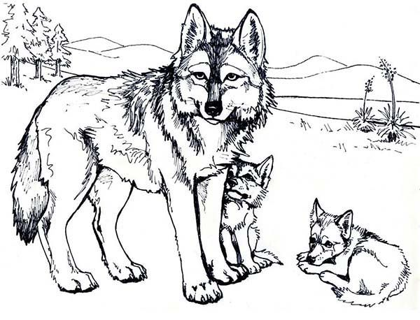 Wolf printable coloring home for Free printable wolf coloring pages