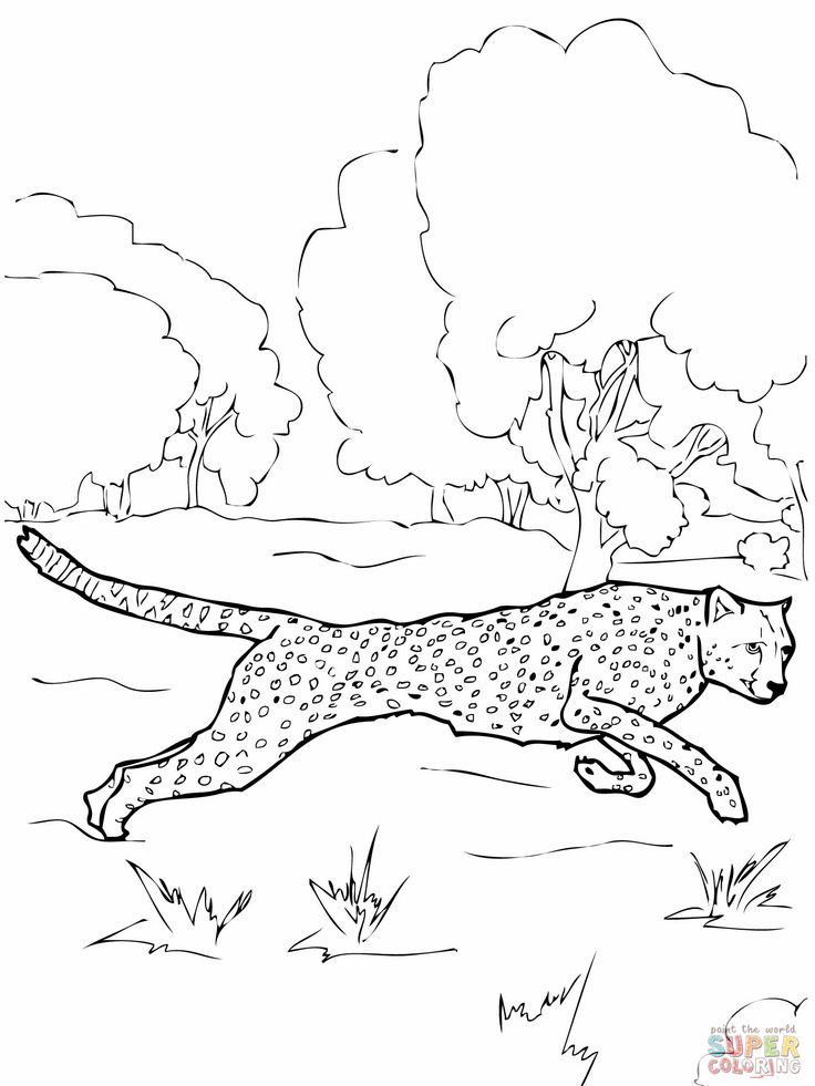 Realistic Cheetah Coloring Pages Cheetah Coloring Page Pages