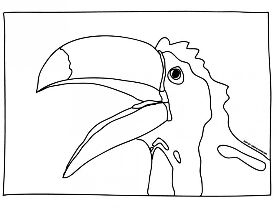 Toucan Coloring Page AZ Coloring