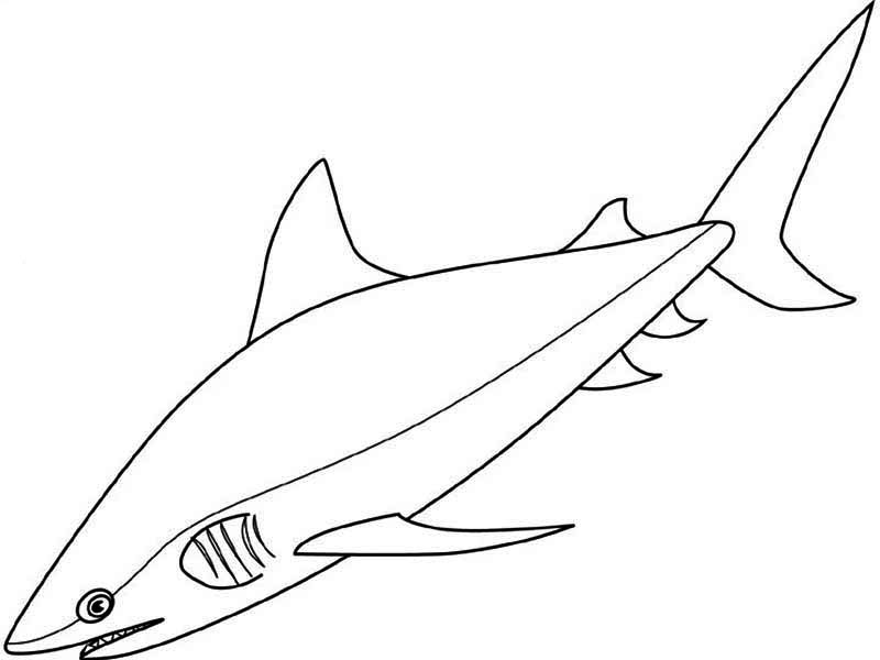 Shark Color Page Az Coloring Pages Mako Shark Coloring Page