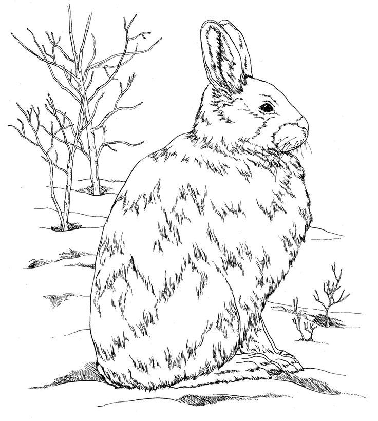 2nd Grade Coloring Pages Homerhcoloringhome: Burgess Animal Coloring Pages At Baymontmadison.com