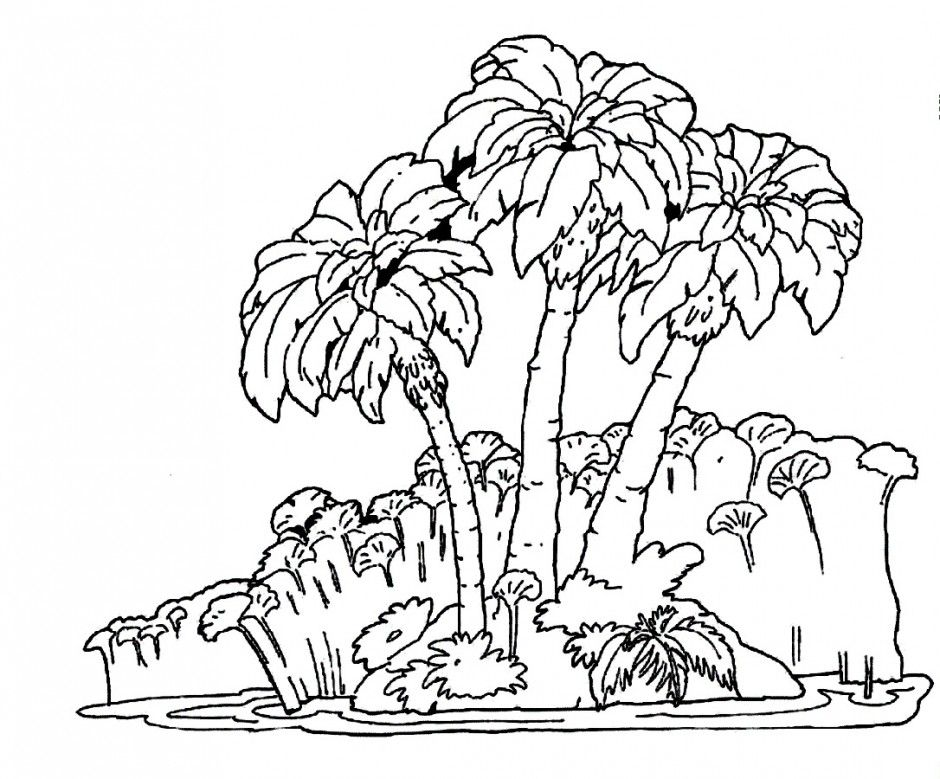 Tropical Rainforest Trees Animals Coloring Pages