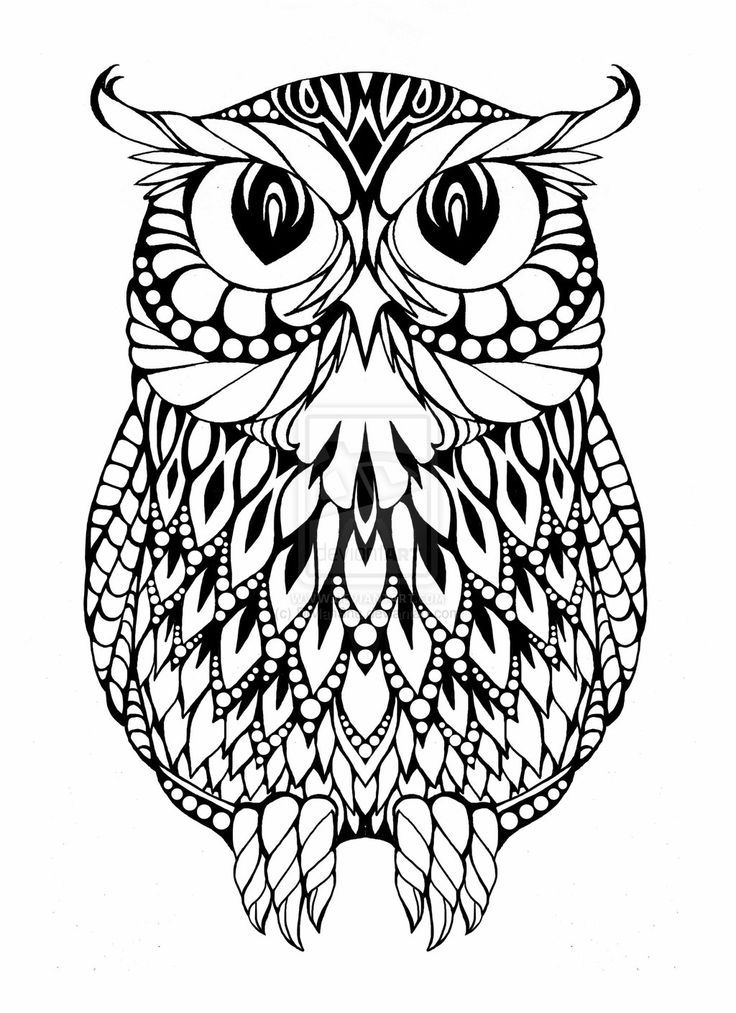 Cool Owl Coloring Pages