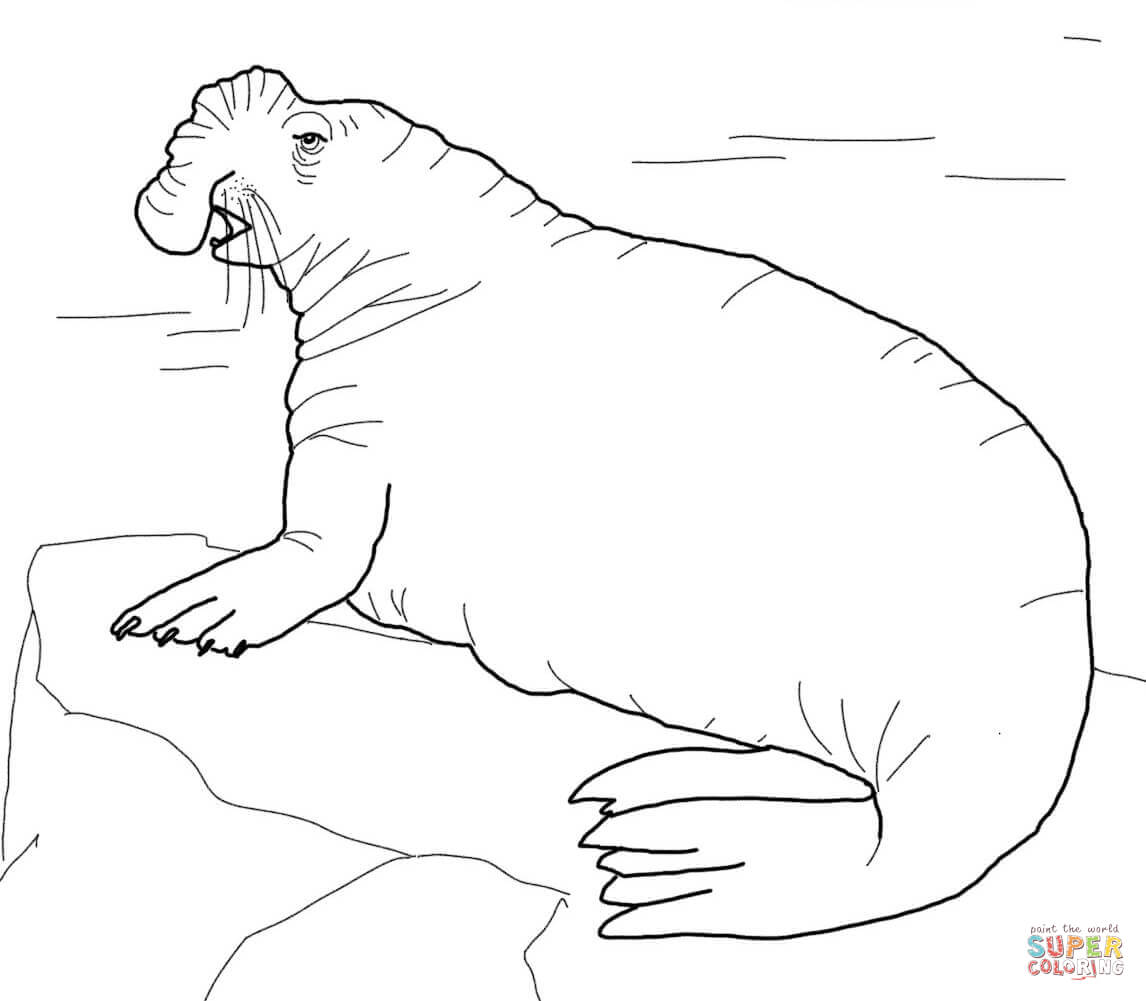 seal mask coloring pages - photo#22