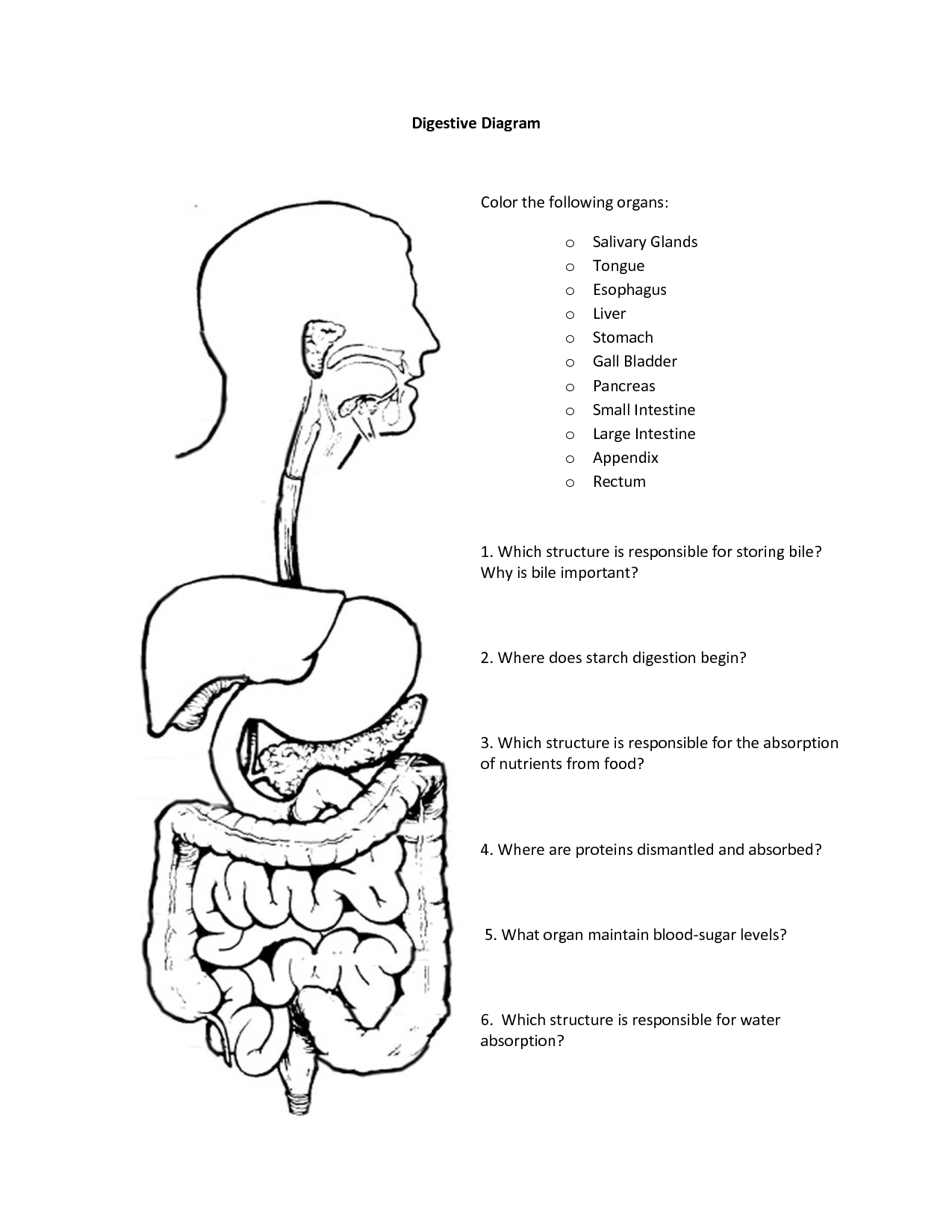 coloring pages digestive system - photo#4