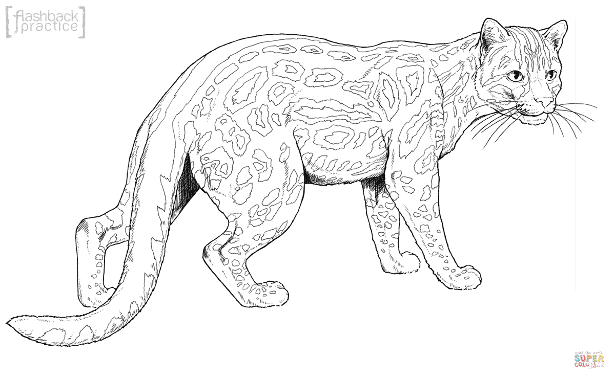 margay cat coloring page free printable coloring pages