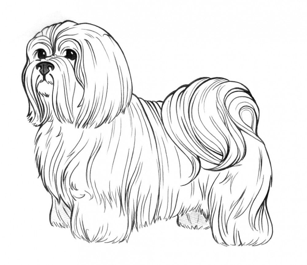 Realistic Puppy Coloring Pages - Coloring Home