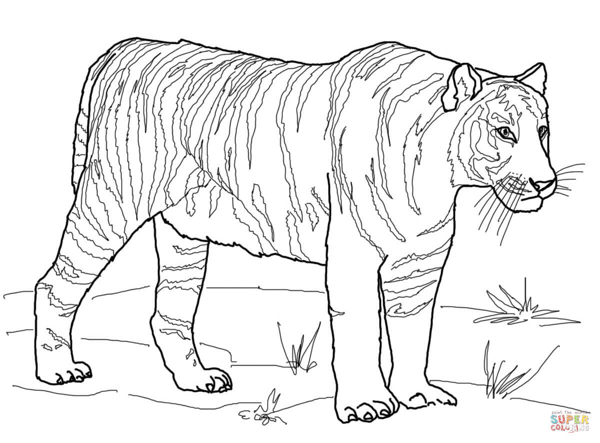 Tigers Printable Coloring Pages