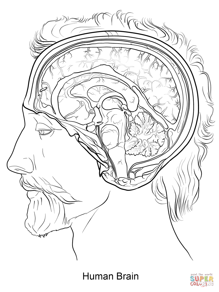 Coloring Pages Nervous System Coloring Pages nervous system coloring pages az human brain page