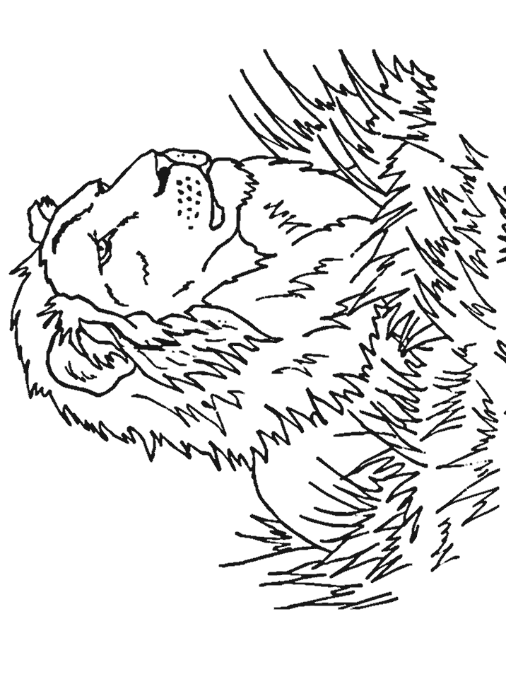 Big Cat - Coloring Pages for Kids and for Adults