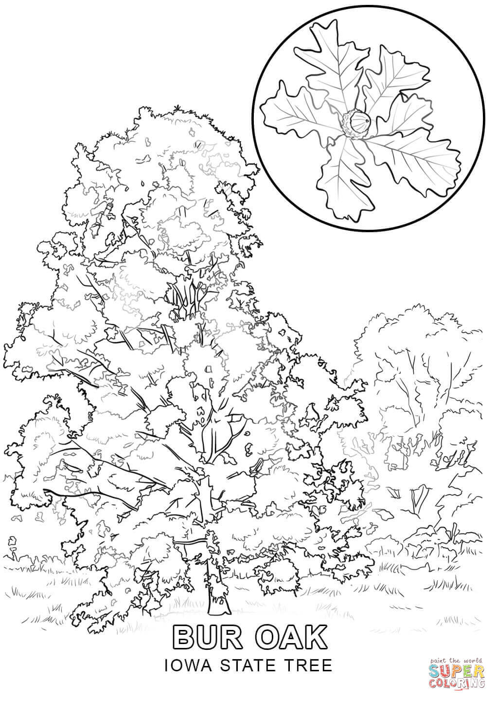 printable tree coloring pages - louisiana state tree coloring page coloring home