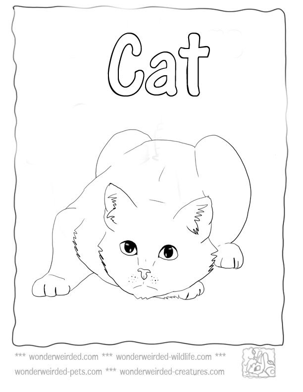Cat Coloring Page,Echo's Cat Coloring Pictures from Pet Coloring Pages