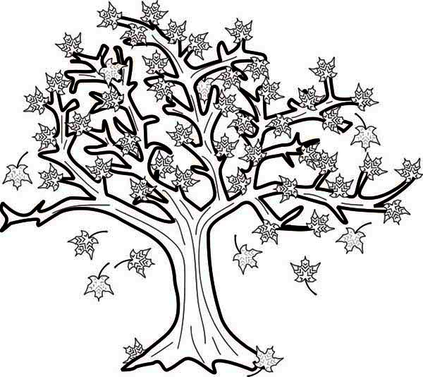 maple tree coloring page for kids