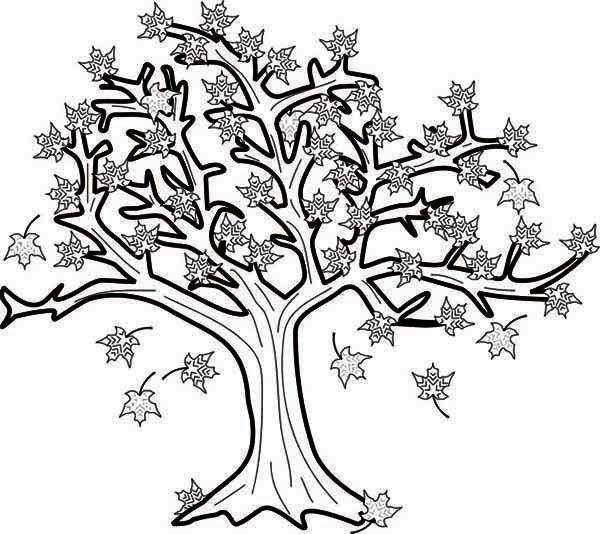 Раскраска осеннего дерева с листьями