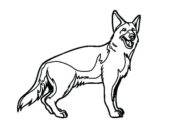 The Best Free German Shepherd Drawing Images. Download From - Coloring  Home